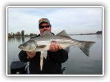9lb Striper from the Sacramento River